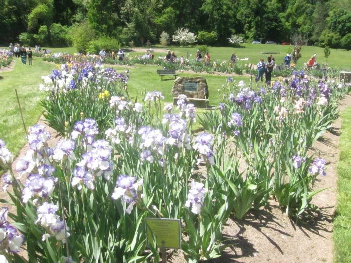 Pres Gardens Irises