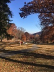 nevins-park-leaves
