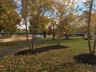 riverside-park-trees