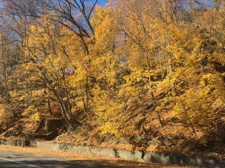 rt-611-north-yellow-burst