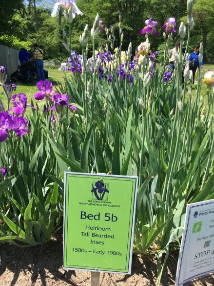 Presby Gardens Bed 5b