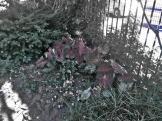 LCG Fence