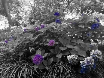 LCG Flowers Blue Sky